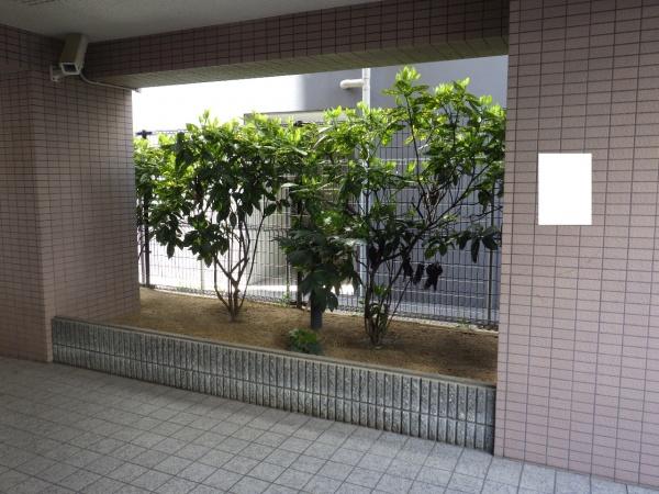 サルココッカ 植栽前