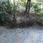 マンション中庭植栽工事|何回も枯れるので違う植木を提案 大阪府大阪市鶴見区のマンション