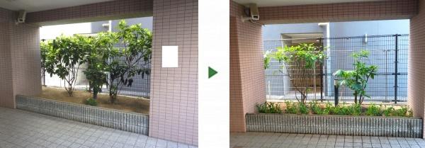 大阪市鶴見区 サルココッカを植栽した事例
