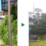 空き家でのカイズカイブキやマツの剪定~奈良県奈良市~