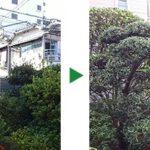 毎年11月末頃の植木の剪定~10年来の付き合い 大阪市鶴見区