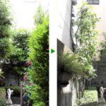 お花に合わせたお庭のお手入れ|近隣宅に枝が伸びないように剪定(植木の剪定、薬剤散布)大阪府大阪市旭区