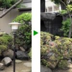 お寺の不要な植木伐採 大阪市天王寺区
