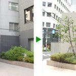オフィスビルのエントランスの剪定 大阪市中央区
