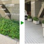 オフィスの観葉植物のメンテナンス 大阪市中央区