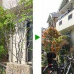 枝が重なり合ってしまった植木の剪定(キンモクセイ、ソヨゴ、ウメ、サザンカ)大阪府枚方市