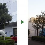 落ち葉を減らしたい楠などの街路樹を剪定 京都市南区