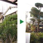 100平米程度の広さのお庭で庭木剪定~大阪府吹田市~