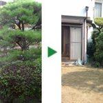 100㎡程度の広いお庭の剪定と芝刈り~クロマツ、サザンカ等~奈良県奈良市