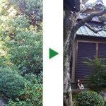 マキ、ヤマモモや腐っているカシなどの庭木の剪定~大阪府茨木市~
