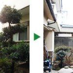 枯れてしまった植木の伐採・剪定~ヒマラヤスギ、サザンカなど~大阪市城東区
