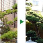 新築のお庭へ植木の移植・植栽~ダイミョウチクなど~大阪市旭区