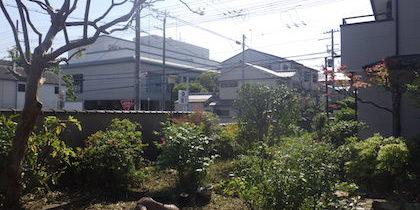 作業後の庭