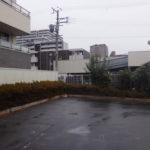会社の駐車場の植え込みに勝手に生えた木を切ってほしい 大阪市城東区