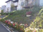 家の斜面に生い茂った雑草