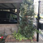 玄関前をスッキリと剪定作業|リクエストに応え植栽  大阪府枚方市