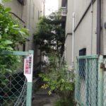 家の隙間に生えた植木の伐採作業|狭いため注意し伐採作業 大阪府枚方市