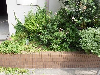 作業前の花壇