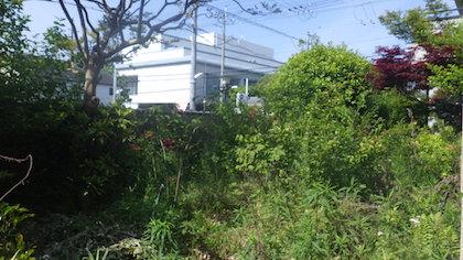 手入れ前の庭