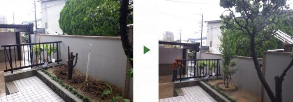 大阪市此花区の自宅 ダイスギ伐根の前後写真