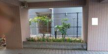 マンションの敷地にサルココッカを植栽した写真 完成版