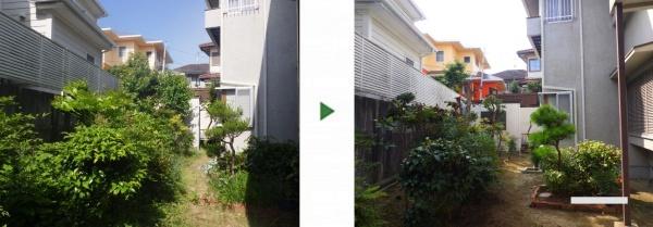 空き家の庭に生えたカキやカリンをサッパリ綺麗に剪定した写真