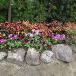 花壇の空きスペースに花植栽|ストック・ナデシコ・パンジーなど 奈良市