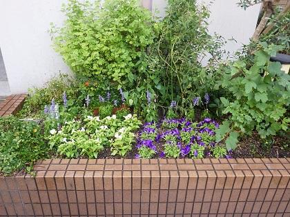 植栽後の花壇
