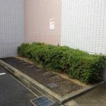 マンション花壇の猫対策|芝生に猫が集まるのを防ぎたい 大阪府大阪市城東区