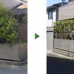 レッドロビン生垣を剪定して竹の支柱で幅調整 大阪府柏原市