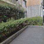 マンションの生垣剪定|近隣部分はキツメに剪定 大阪府大阪市中央区