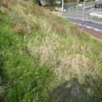 空き家の草刈り作業|斜面もきれいに作業 大阪府堺市美原区