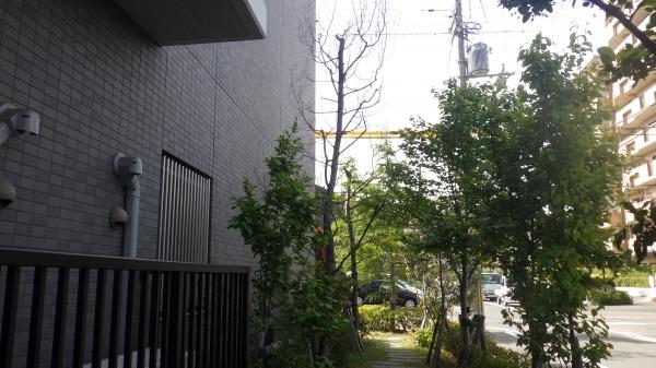 大阪植木手入れ