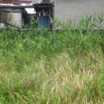 雑草対策(防草シート工事)|空き地の雑草対策で防草シート施工 大阪府高槻市