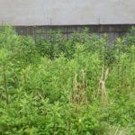 防草シート工事|空き地の雑草対策で防草シート施工 大阪府茨木市