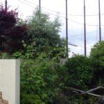 池のある家の剪定作業|池に注意し剪定作業 大阪府堺市南区
