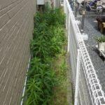 雑草対策|防草シート(彩植兼美)施工  大阪府堺市堺区