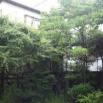 近隣の迷惑にならないように庭木の剪定|日が当たるように明るく庭木を剪定 大阪府大阪市北区