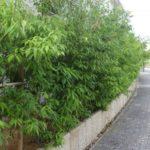 通行の邪魔にならないように庭木の剪定|家の中が見えないように剪定 大阪府大阪市旭区