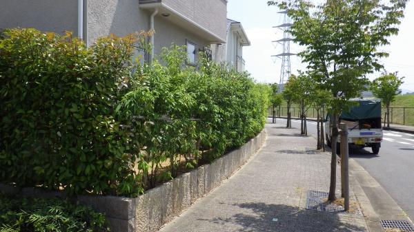 大阪市庭木手入れ
