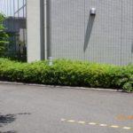 玄関前の低木剪定|低木の庭木剪定 大阪府大阪市浪速区