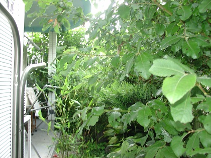 雑草だらけだった庭