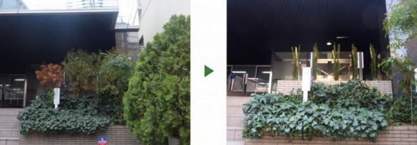 ペンシルロッケットの植木を会社の玄関口に植えた事例写真 施工前後