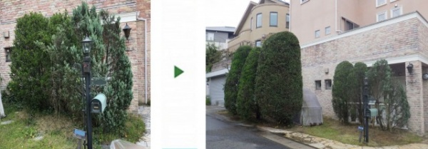 吹田市で植木の剪定と支柱設置をした事例 施術前後