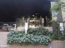 ペンシルロッケットの植木を会社の玄関口に植えた事例写真 施工後