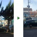 フェンス沿いの木を伐採|7mのカイヅカイブキ5本が倒れそう 大阪府堺市北区