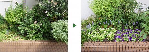 花壇の植栽前後