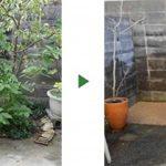 花壇の木を撤去してまっさらな状態にしたい 大阪府堺市西区