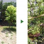 緑一色のお庭がカラフルに~116株の花の苗をレイアウト~ 大阪府吹田市