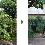 庭のミカン(6m)とヤマモモ(3m)を実が付きにくいように剪定 大阪府池田市